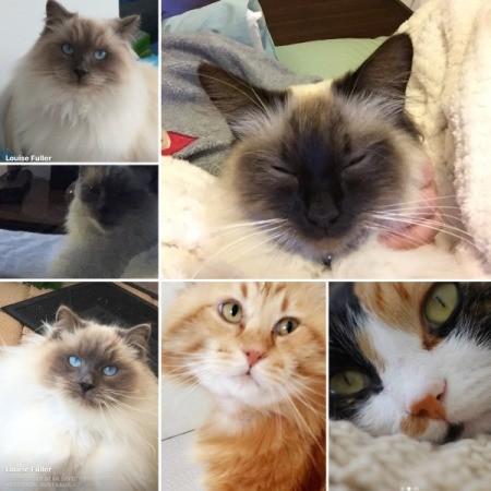Cat Spraying Inside - montage of cat photos