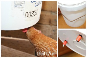 DIY Bucket Chicken Waterer