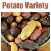Picking a Potato Variety