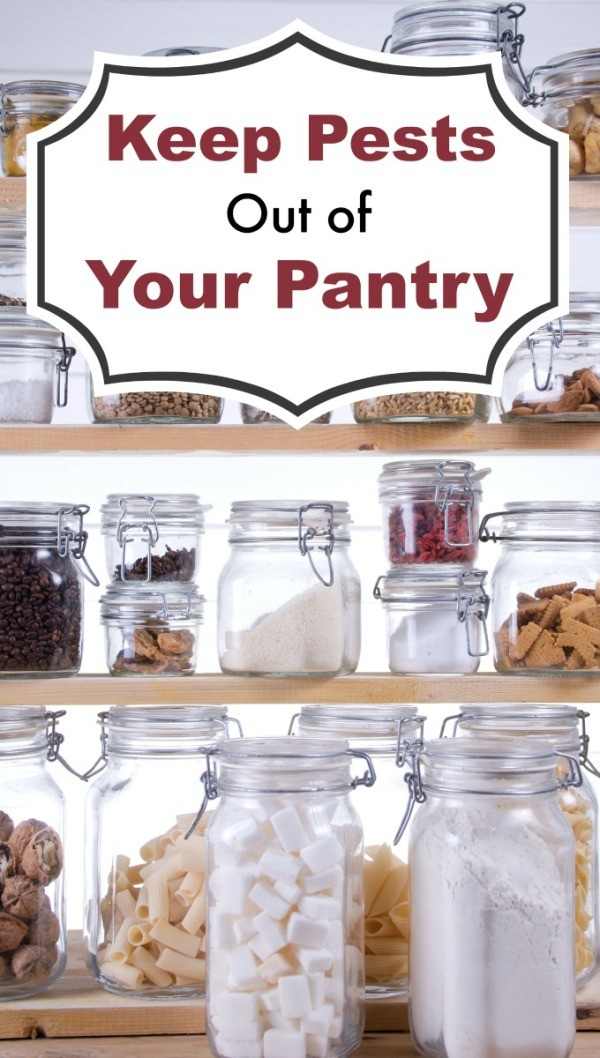 how to keep weevils out of pantry