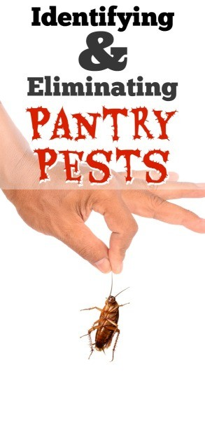 Identifying And Eliminating Pantry Pests Thriftyfun
