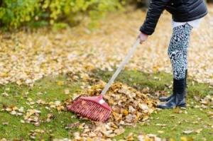 A 14 year old raking leaves.