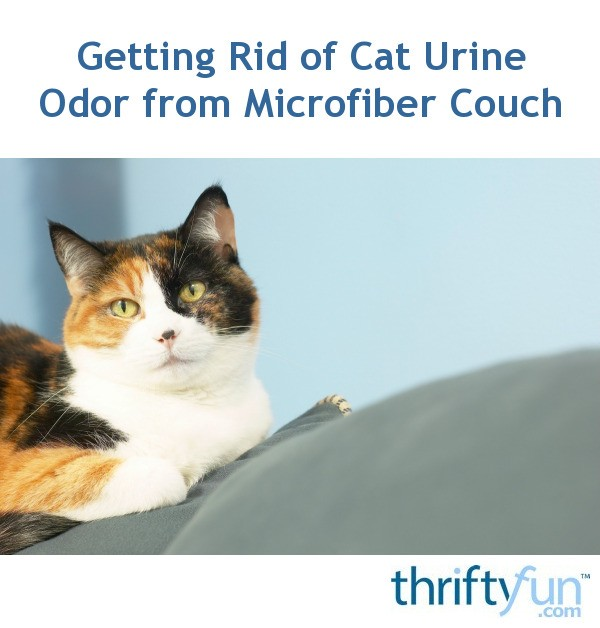 How To Remove Cat Urine Odor From A Microfiber Couch