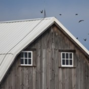 A old wood barn with a white roof and a blue sky beyond.