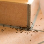 Many ants inside a home.