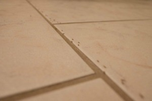 A line of ants on a kitchen floor.