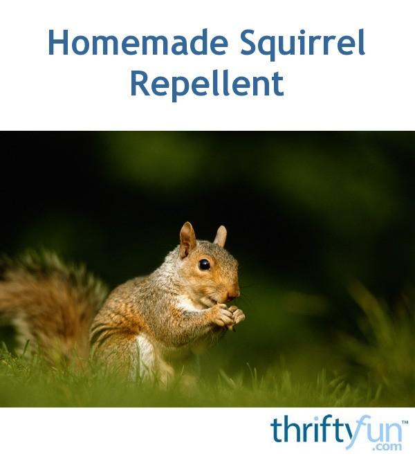 Diy Squirrel Repellent Diy Do It Your Self