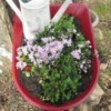 Toy Wheelbarrow as Flower Planter - barrow with watering can and plants