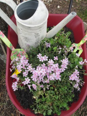 Toy Wheelbarrow as Flower Planter - planted with a watering can, gardening fork, and trowel in barrow