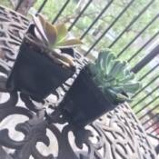 Identifying Houseplants - succulents