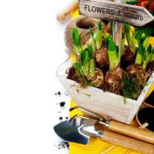 A wooden gift planter of spring bulbs.