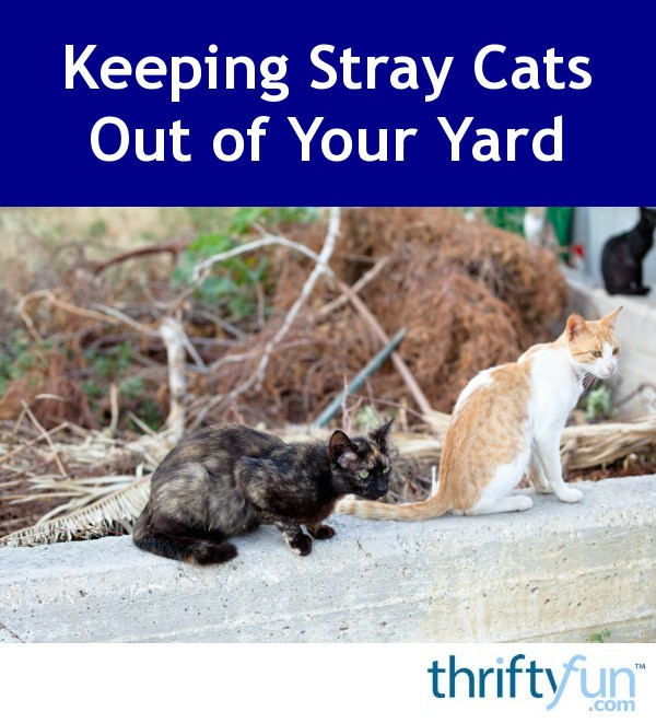 How To Get Stray Cats Out Of Your Yard
