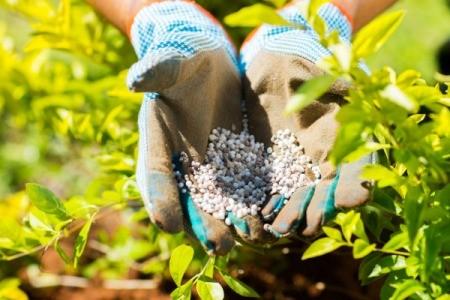 A gloved hand sprinkling fertilizer in a garden.