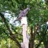 Lulu - on top of the birdhouse