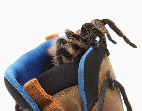 Keep Spiders Out Of Your Shoes Thriftyfun