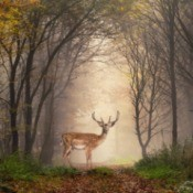 A deer outside in the woods.