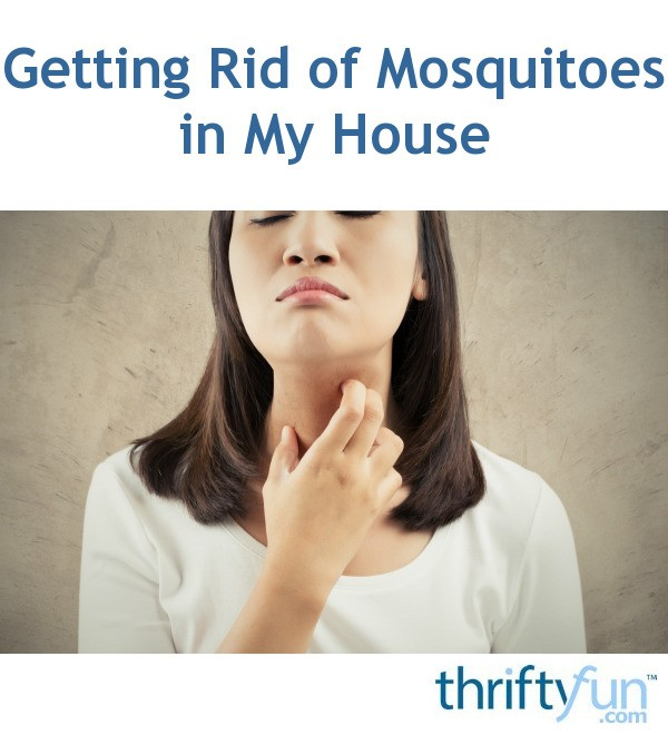 Getting Rid Of Mosquitoes In My House Thriftyfun