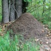 Large ant hill.