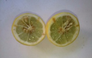 Lemon as Substitute for Smelling Salts - lemon cut in two