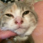 Kitten Coughing and Sneezing