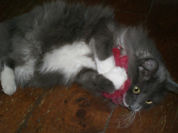 A cat with a net toy.