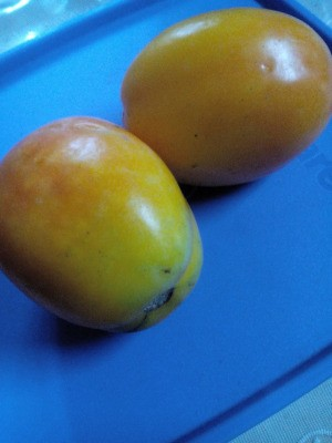 Two yellow-orange tomatoes on a blue background.