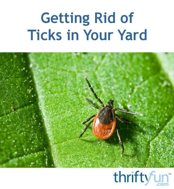 Getting Rid of Ticks in Your Yard | ThriftyFun