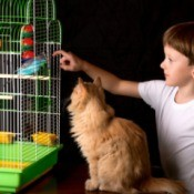 A cat staring at a bird cage.