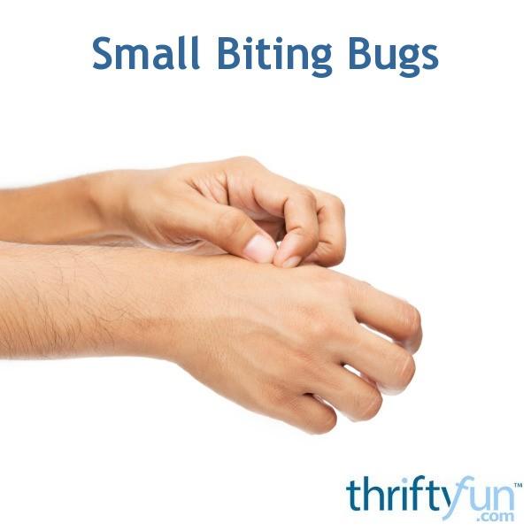 Identifying Small White Biting Bugs Thriftyfun