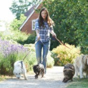 A dog walker, walking dogs to earn extra money.