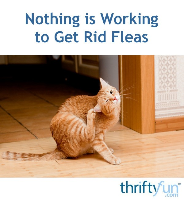 Nothing is Working to Get Rid Fleas | ThriftyFun