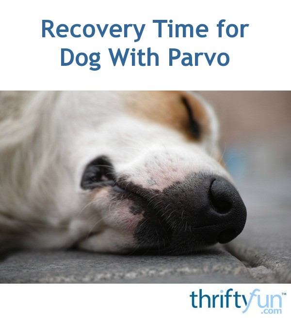 Recovery Time For Dog With Parvo Thriftyfun