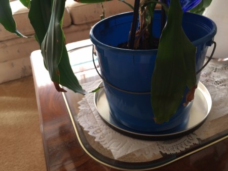 Recycled Popcorn Lid as Plant Saucer