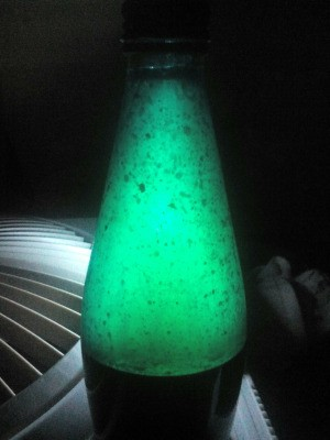 DIY Lava Lamp - lamp appearing green with bubbles inside bottle