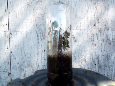 Mini Greenhouse From Soda Bottles