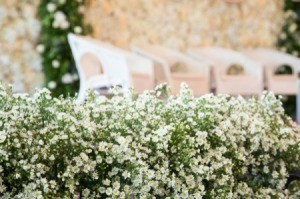 Chairs and flowers at a wedding.