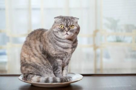 Cat on Countertop