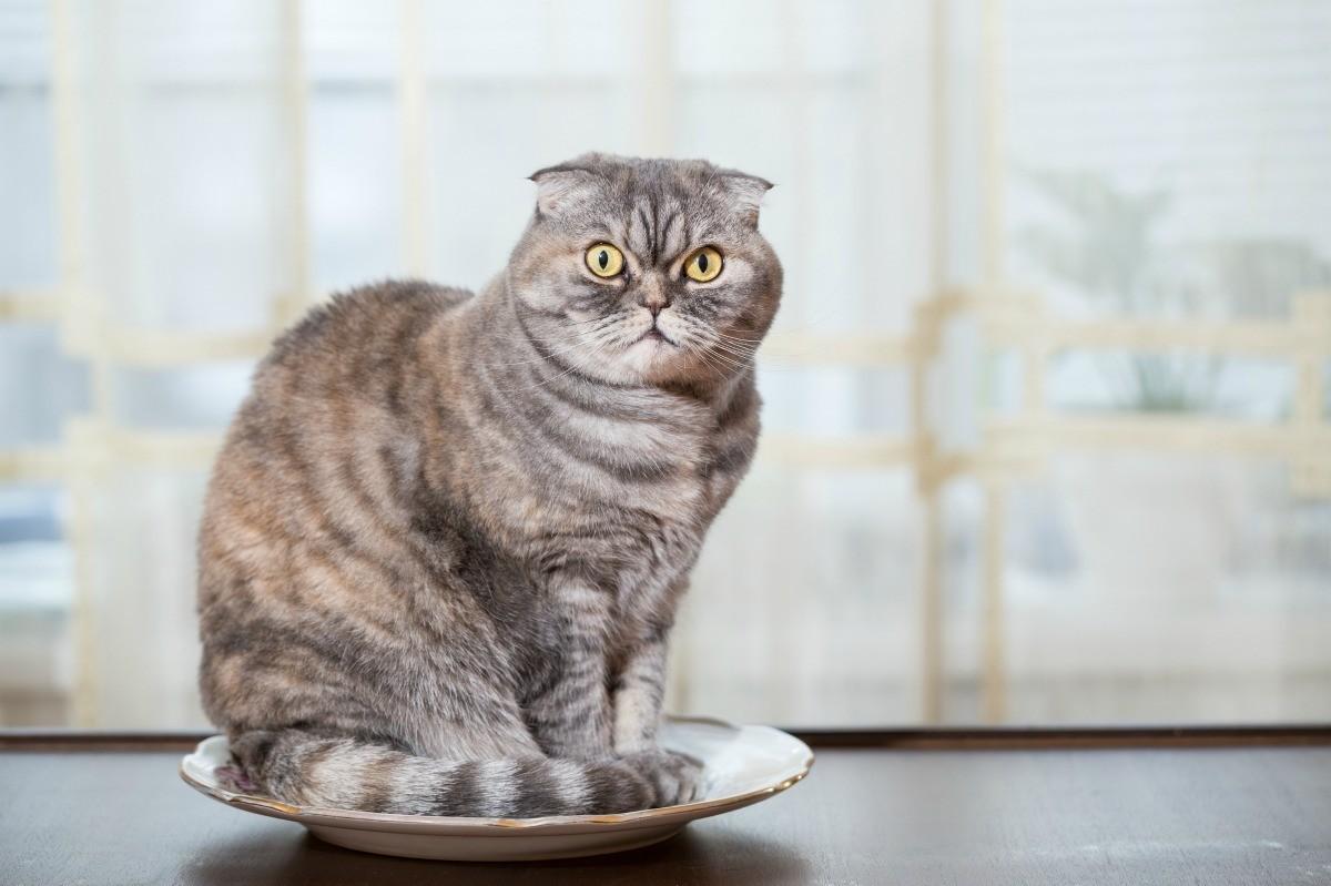 Cat Peeing on Countertops   ThriftyFun