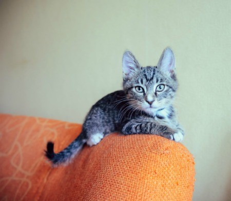 Cat on Couch