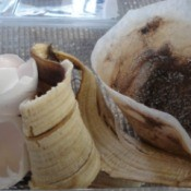 Homemade Fertilizer from Kitchen Scraps - original scraps before prepping