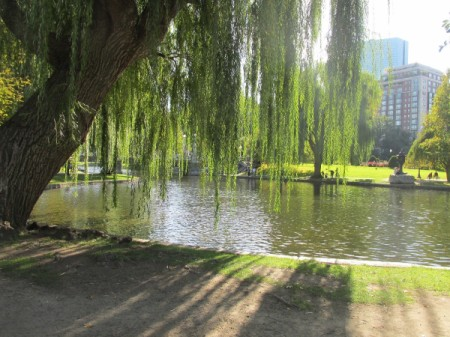 The public gardens in Boston.