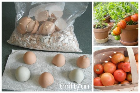 Save Eggshells for Planting Tomatoes