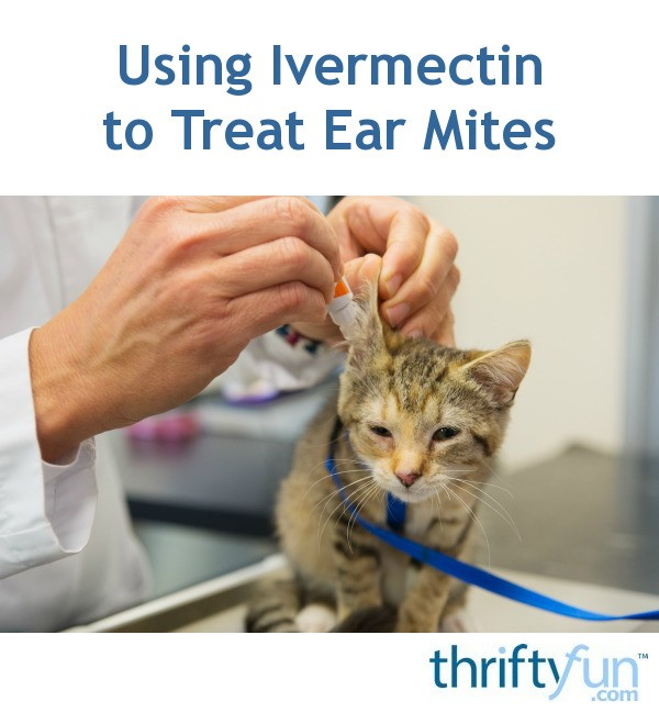 Treating Ear Mites In Dogs With Ivermectin