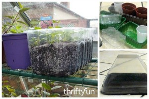Reuse Plastic Containers for Seedlings