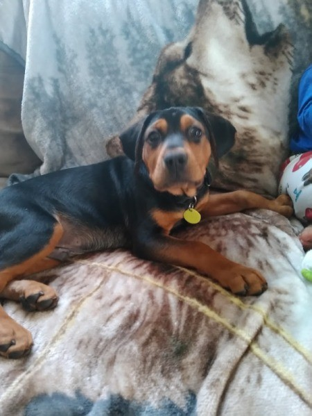 What Breed Is My Dog? - black and brown puppy