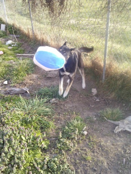 Inflatable Beach Ball Enrichment Activity for Dogs - dog with ball in his mouth