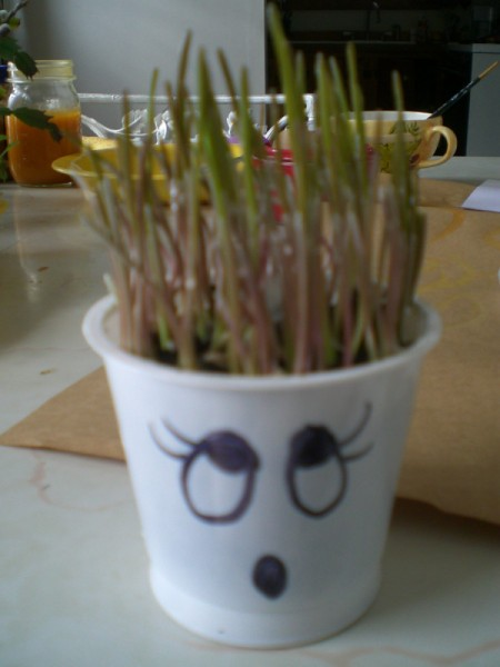"""Grow Grass Hair for Project or Pets - children can cut the """"hair"""" or use a mister to spray hairspray"""