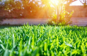 A beautiful green lawn in the sunshine.
