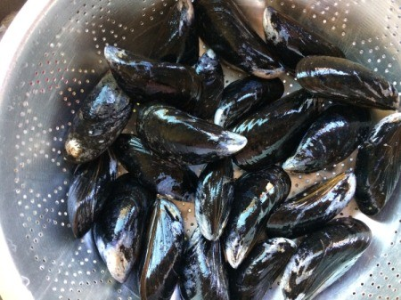 Green Mussels in colander
