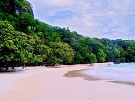 Serenity of White Sand Beach - stretch of beach with trees on shore